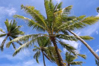 ヤシの木と青空の写真・画像素材[993766]