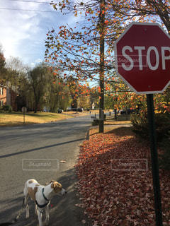 犬の散歩の写真・画像素材[990055]