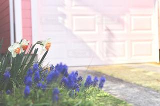 春の庭先の写真・画像素材[2104786]