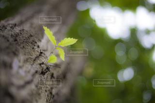 芽を出した光の写真・画像素材[1137159]