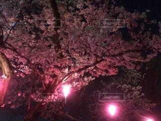 夜の写真・画像素材[32761]