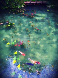岐阜のモネの池の写真・画像素材[1296248]