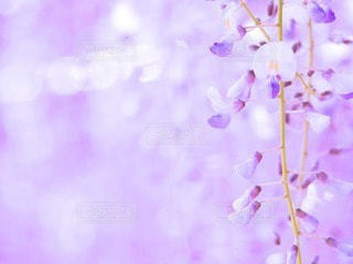 お花畑の写真・画像素材[49073]