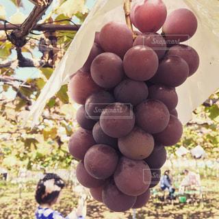 果物と野菜スタンドのグループの写真・画像素材[990973]