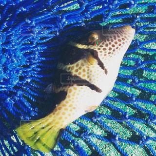 水面下を泳ぐ魚 - No.991116