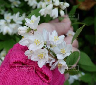 近くの花のアップ - No.995095