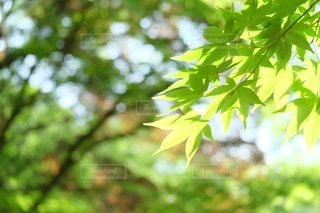 自然の写真・画像素材[32804]