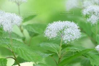 花の写真・画像素材[33035]
