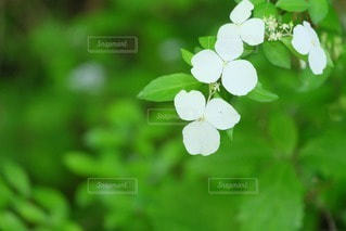 花の写真・画像素材[33037]