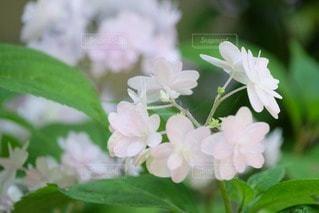 花の写真・画像素材[33039]