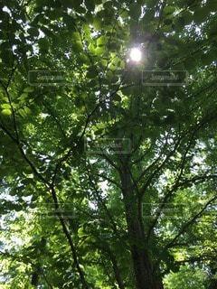 自然の写真・画像素材[33213]