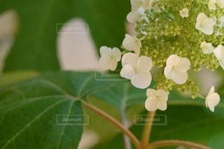 自然の写真・画像素材[33239]