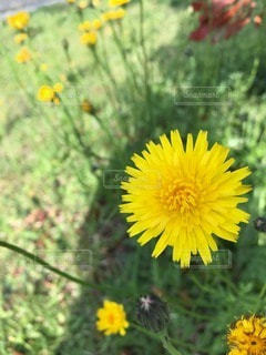 自然の写真・画像素材[33262]