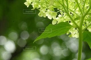 自然の写真・画像素材[52742]
