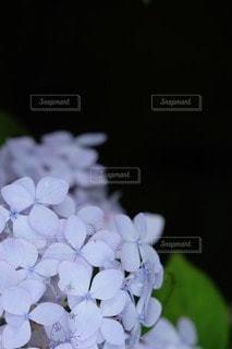 自然の写真・画像素材[52775]
