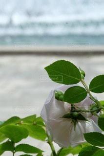 自然の写真・画像素材[52782]