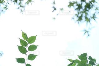 自然の写真・画像素材[181303]