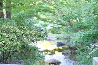 自然の写真・画像素材[210813]