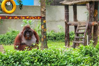 ベンチに座っている猿の写真・画像素材[991520]