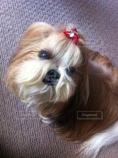 犬の写真・画像素材[66189]