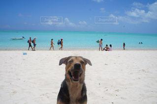 犬とビーチの写真・画像素材[991792]