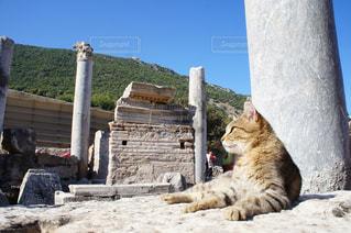 ネコと遺跡の写真・画像素材[993226]