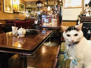 猫のいる喫茶店の写真・画像素材[1008788]