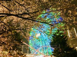 夜桜と観覧車の写真・画像素材[1112667]