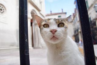 覗く猫の写真・画像素材[1125993]