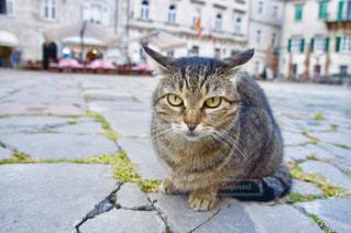 地面に座っている猫の写真・画像素材[1134896]