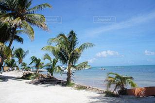 ベリーズシティのビーチの写真・画像素材[1230563]