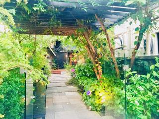 自然派カフェの入口の写真・画像素材[1302427]