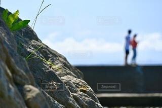 海沿いを歩くカップルの写真・画像素材[4667668]
