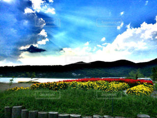 空と花の写真・画像素材[991932]