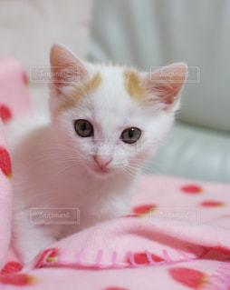 ベッドの上で横になっているオレンジと白猫 - No.992034