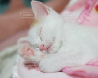 近くに毛布の上に横になっている猫のアップ - No.992036