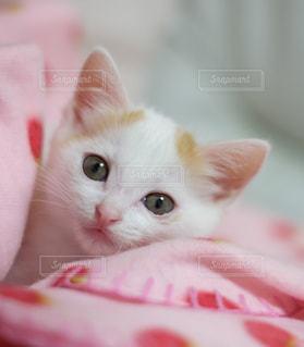 近くに猫のアップの写真・画像素材[992037]