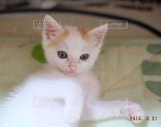 白い面の上に座って猫の写真・画像素材[992040]