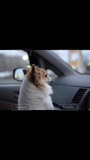 車の上に座っている犬 - No.992173