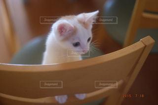 ボウルに座ってオレンジと白猫の写真・画像素材[992403]