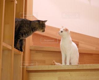 棚の上に座っている猫の写真・画像素材[992404]