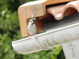 ベンチに座っている鳥の写真・画像素材[992557]