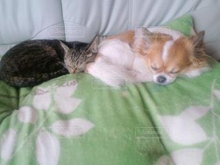 ベッドの上で横になっている猫 - No.993029