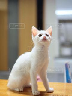 テーブルの上に座って猫の写真・画像素材[994955]