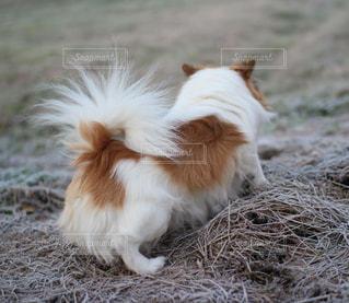 地面に横たわっている茶色と白犬 - No.994959