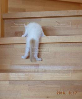 木製の表面上を歩く猫の写真・画像素材[994964]