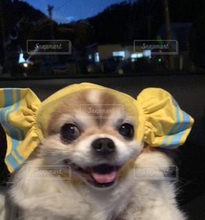 犬はカメラにポーズします。の写真・画像素材[1186009]