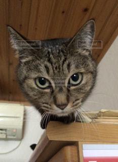 木製キャビネットの上に座っている猫 - No.1186016