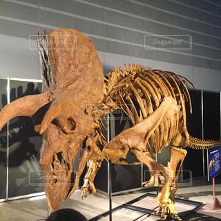 恐竜の化石の写真・画像素材[992357]