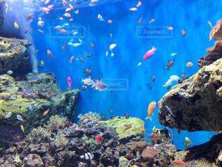 カラフルな魚達の写真・画像素材[994717]
